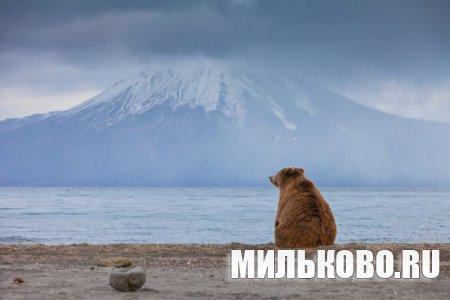 В Петропавловске проходит выставка фотографа дикой природы